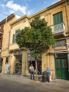 Orange trees in Lefkosia, Cyprus.