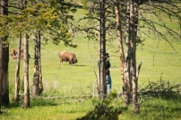 Ed Ritterbush photographing bison at Yellowstone National Park.