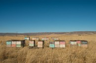 Beehives along Oregon Trail near Chesterfield, ID