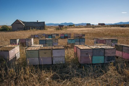Beehives with Old House